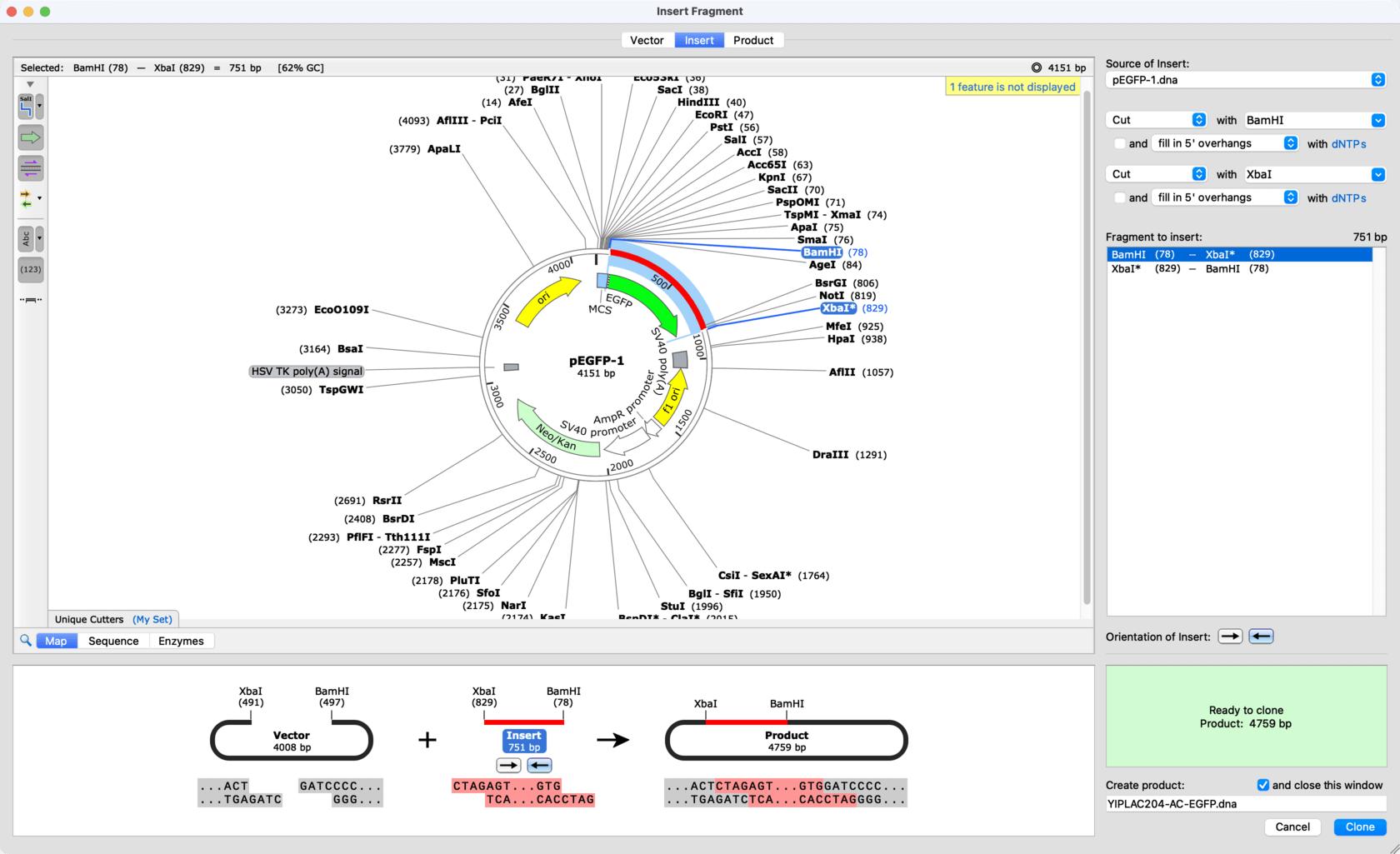 Circular Plasmid Map